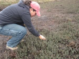 Cristina checking vines at Otter