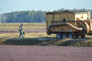 harvest-cleanup-205